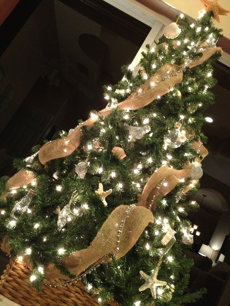 12 Best Florida Christmas Trees Images On Pinterest