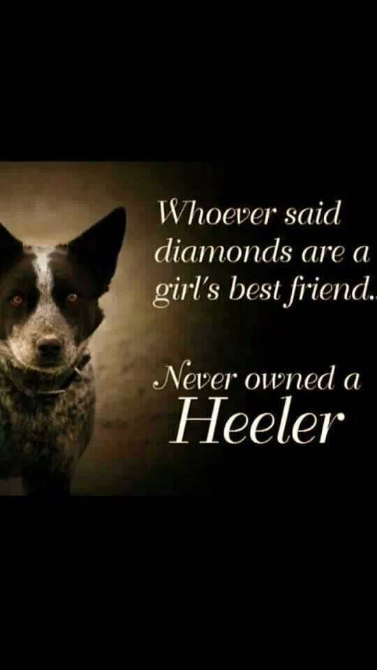 Very true ♥ I love my red heeler!! She is extremely smart and full of energy!!