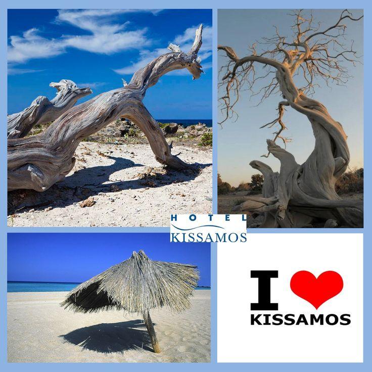 #elafonisi #falasarna #kedrodasos #ilovekissamos #kissamos_hotel
