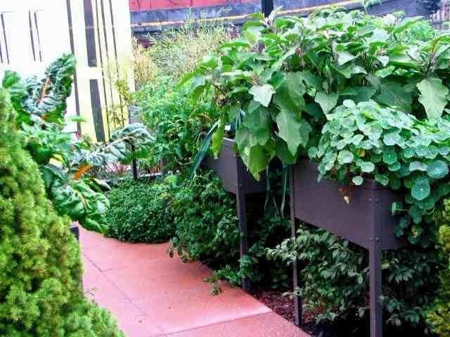 six container gardening ideas you need to know - Container Garden Ideas Vegetables