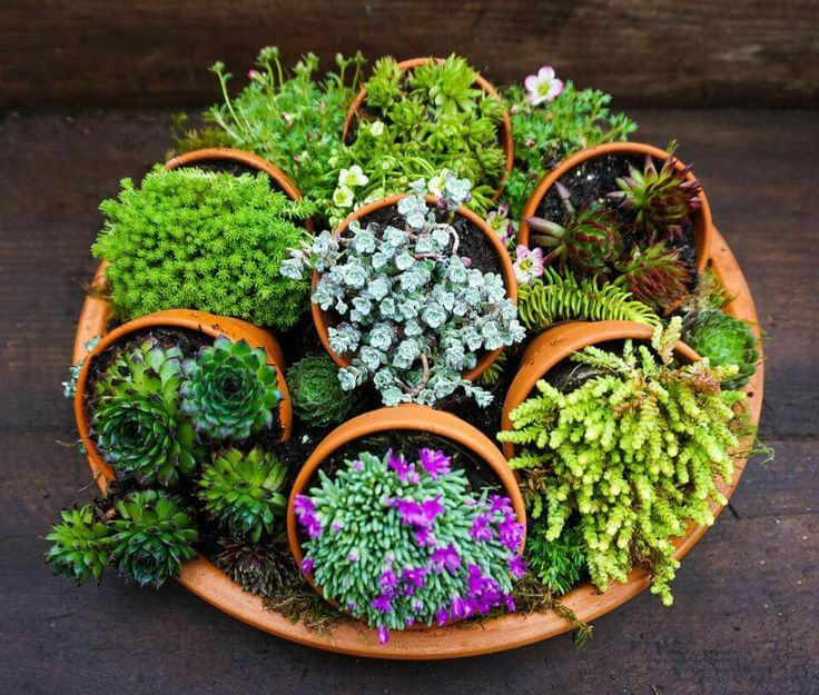 Cool potting idea, I want to try it with Herbs.