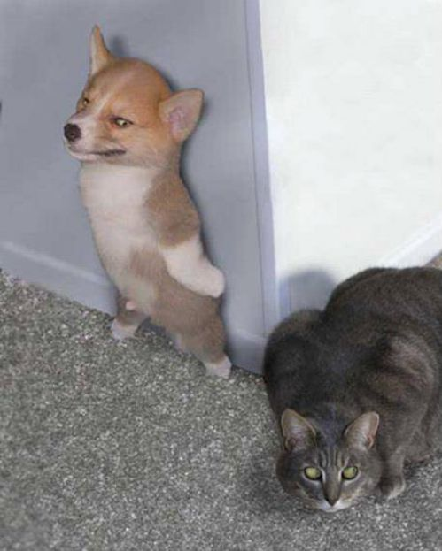 Will These 25 Images Of Dogs VS Cats Give Us The Answer To Which Pet Is Better?:
