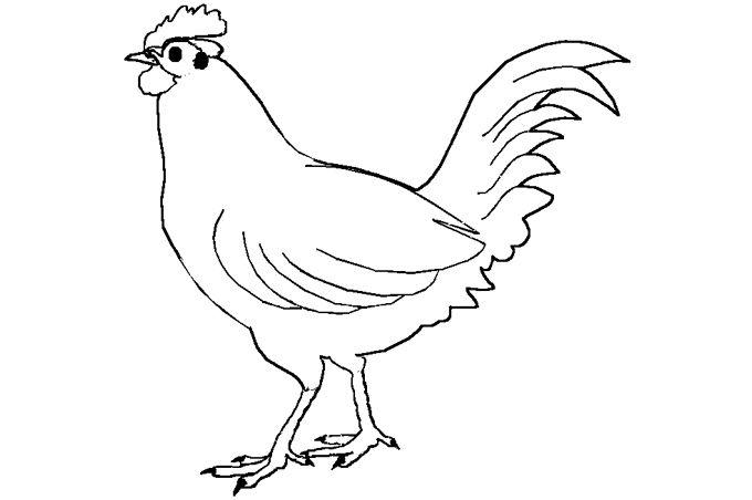 صورة ديك مرسوم ومفرغ لتعلم تلوين الأشكال Bird Coloring Pages Farm Animal Coloring Pages Chicken Coloring Pages