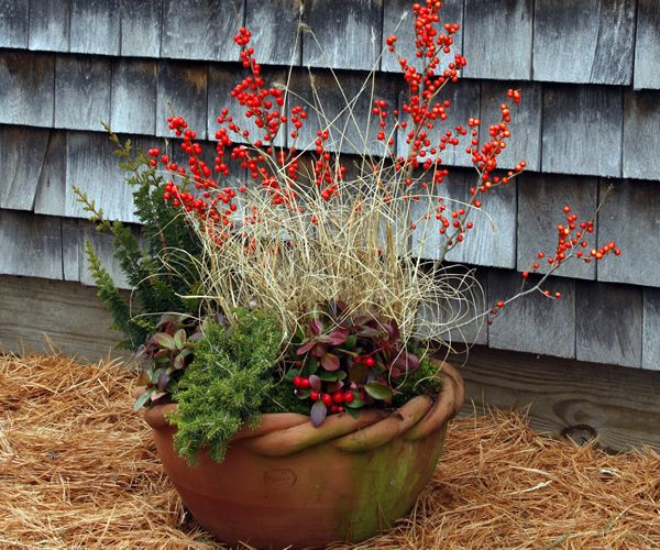 Vibrant winter containers finegardening container for Planting a garden