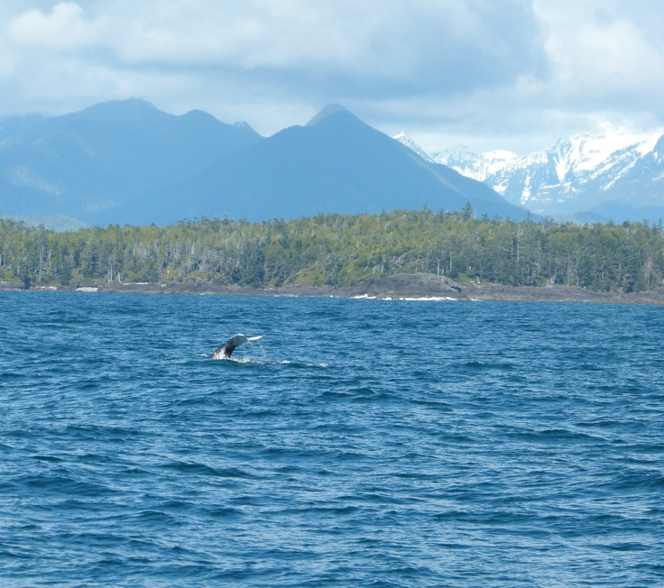 Whale Tail in Tofino BC