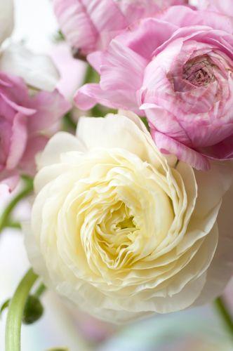 http://www.gardenphotoworld.com/lightbox/detail/6141-Ranunculus_floral_arrangement_.html