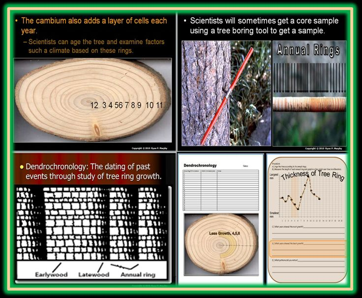 what is tree ring dating The dating process tree-ring dates for standing buildings in britain have been reported for the past 20 years, with half of these dates being produced within the last five years what, however, is being dated when the bark edge is present, is the felling or dying of the tree itself.