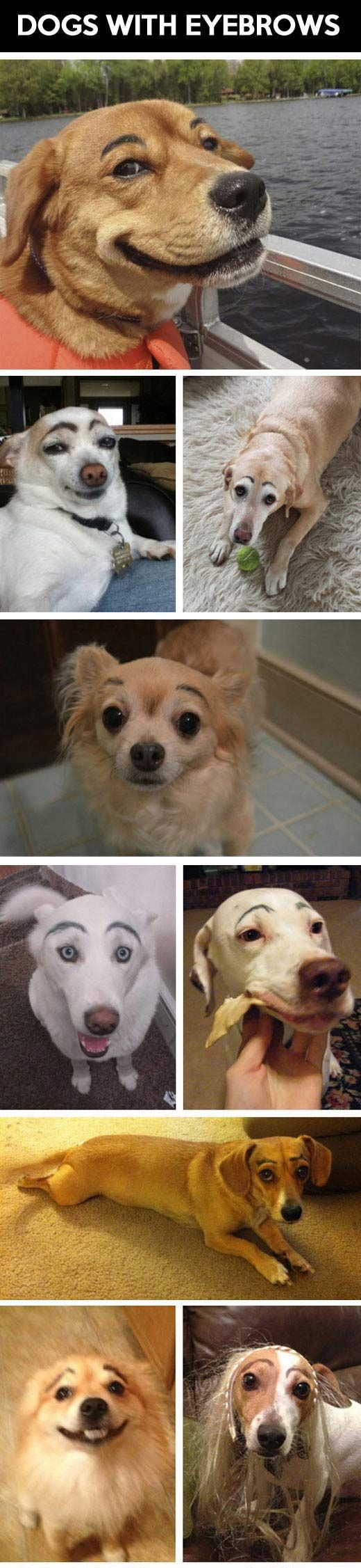 Dogs with eyebrows. I showed someone this pin a while ago and she got all upset and asked me how I'd like it if someone drew massive eyebrows on me and laughed at me too. It's not cruel! It's doggy art!