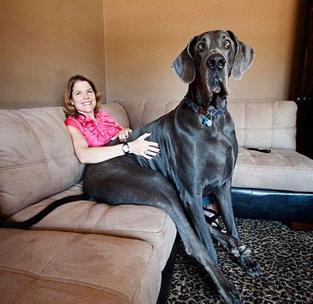 fotos perros grandes