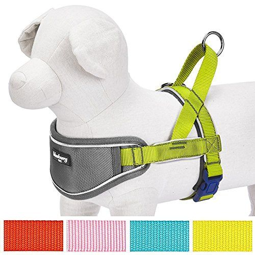 """Blueberry Pet 5 Colors Soft & Comfy 3M Reflective Strips Padded Dog Harness Vest Chest Girth 20.5"""" - 25.5""""  Citrus Lime Medium Nylon No Pull Adjustable Training Harnesses for Dogs"""