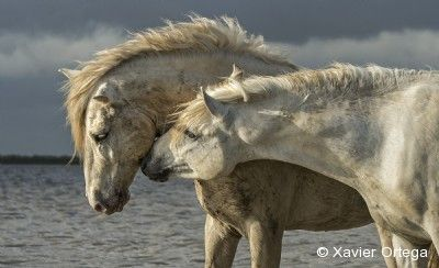 2015 Equine Ideal Online Photography Contest