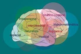 inteligencias multiples localización de las inteligencias en nuestro cerebro. #localizacionIM #inteligenciasmultiples