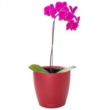 Classico 28 Cherry Planter