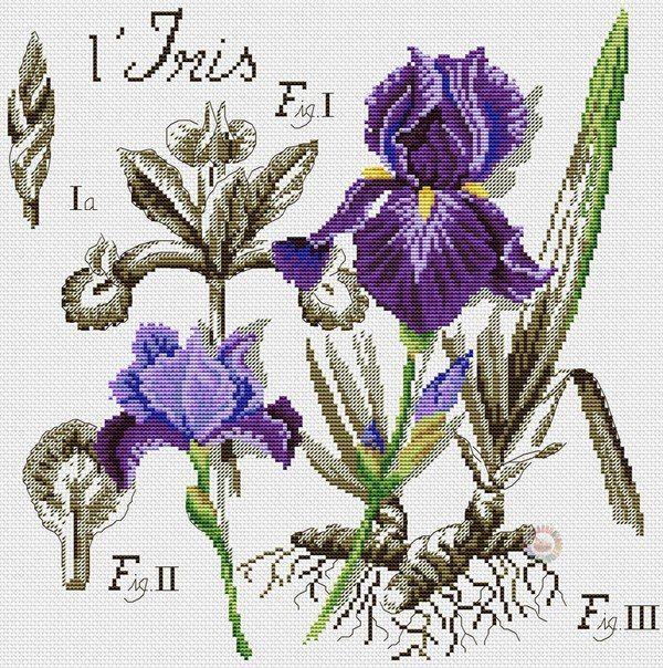 Схема вышивки крестом «L'iris» Ирис