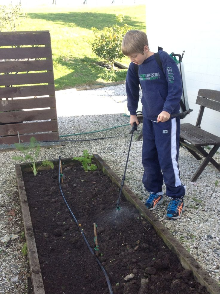Vegie gardening 101. Oliver taking ownership of his first plot of 'his own'. Spraying on our own Bokashi fertiliser.