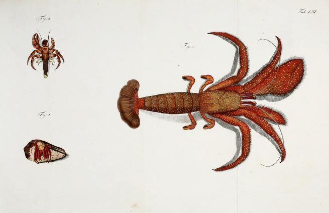 Versuch einer Naturgeschichte der Krabben und Krebse, Johann Friedrich Wilhelm Herbst, 1782-1804.