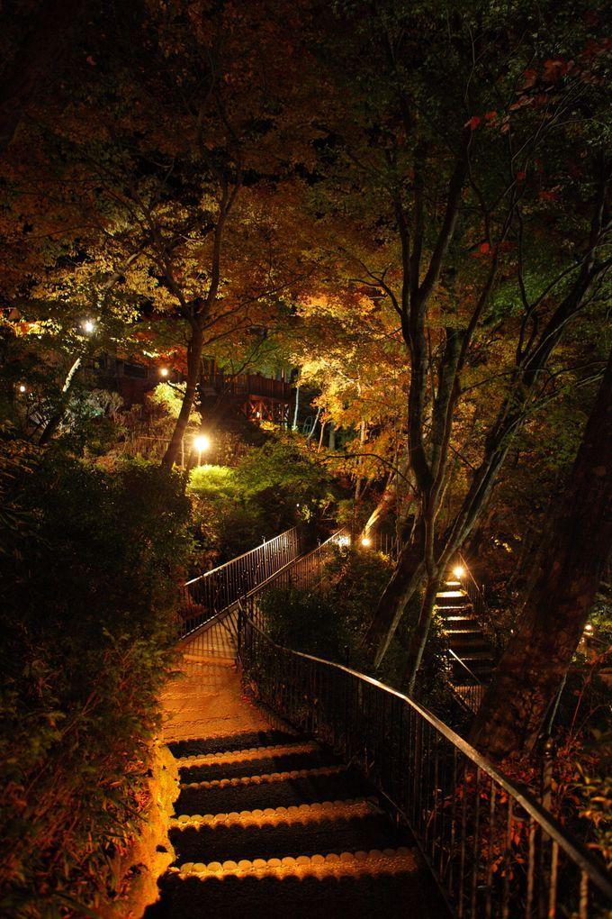 「箱根」って、温泉だけのイメージではありませんか?ところが、そんな「箱根」に穴場紅葉スポットが存在したのです。その場所とは、ヴェネチアングラスを展示する美術館で有名な「箱根ガラスの森美術館」。一体、どんなところなの?
