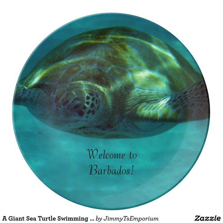 best 25 giant sea turtle ideas on pinterest big turtle