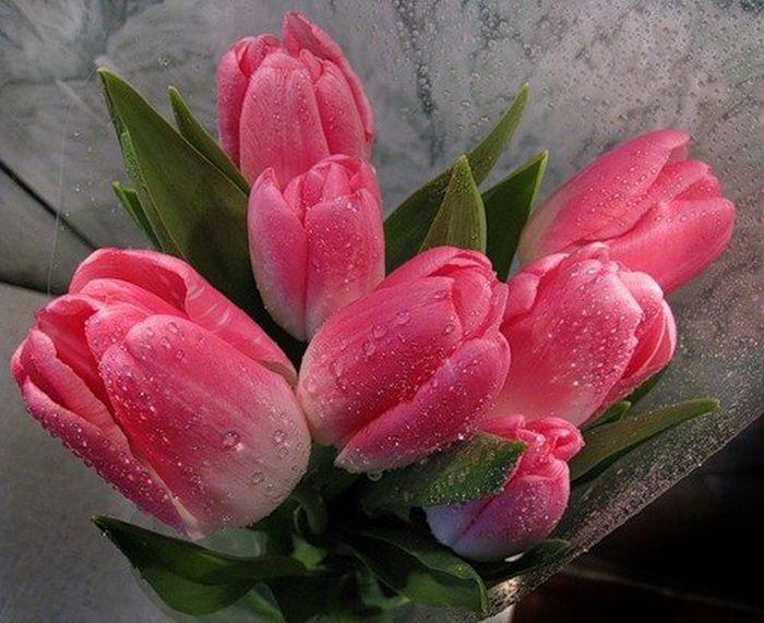 Картинки тюльпаны гифки, днем рождения