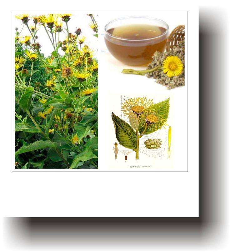 Plante medicinale – IARBA MARE