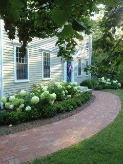 Spring Hydrangeas - traditional - landscape - boston - by Patricia Van Buskirk Landscape Architect