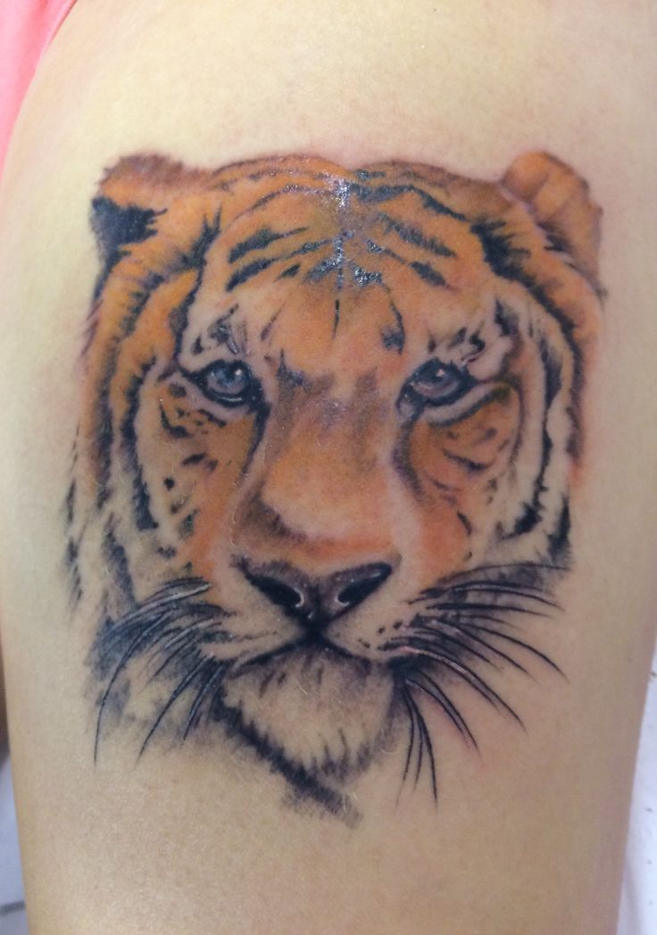 Realism tiger tattoo by Travis Allen at twisted tattoo Yaxley  Www.twistedtattoo.co.uk  Or on Facebook