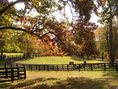 Horse pasture- someday I'll look out the window and see this....
