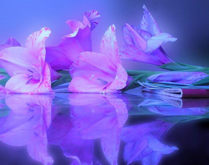 تفسير رؤية الورد الابيض والاسود والازرق والذهبي في المنام لابن سيرين موقع مصري Flowers Art Forms Reflection