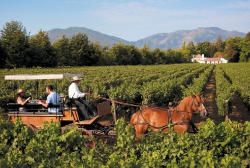 What To Expect When Harvesting Grapes in Chile's Colchagua Valley | TimeOut Chicago - March 21, 2013