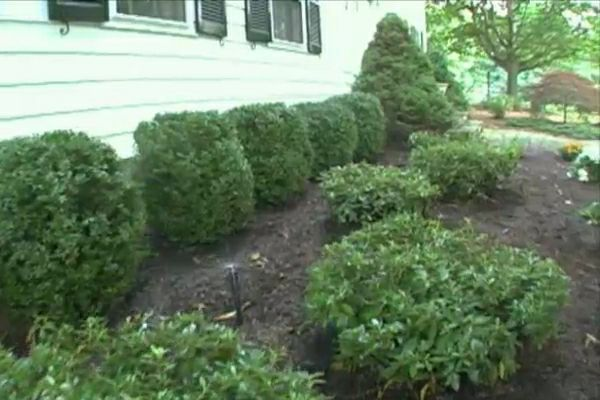 Learn how to install an automatic irrigation system; includes details on running and concealing flexible irrigation lines. #diy