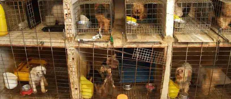 Prohibamos la venta de mascotas en MercadoLibre FIRMA Y COMPARTE ESTA PETICIÓN AHORA!