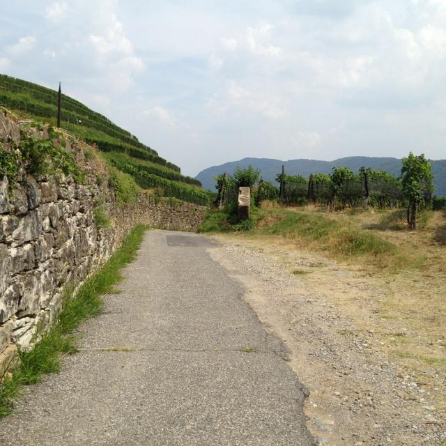 Tussen de wijngaarden naar Chiasso.