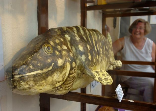 A replica of a 52lb Pike found thrashing about in low water and in an undernourished state when Whittlesey Mere was drained in 1850.