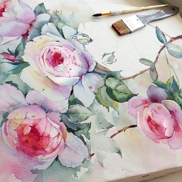 Queen of Sweden rose in watercolor on Behance