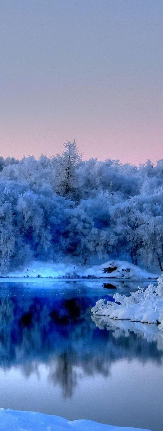 Tree Covered In Blue Snow
