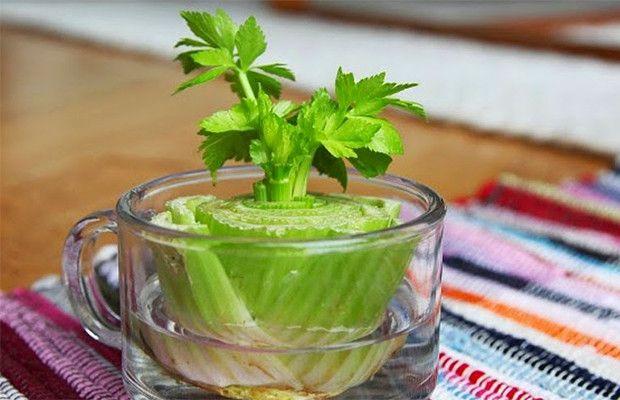 8 Gemüse die du immer wieder nachwachsen lassen kannst - See more at: http://www.erhoehtesbewusstsein.de/8-gemuse-die-du-fur-immer-wieder-wachsen-lassen-kannst/#sthash.s2Kh1KGm.dpuf