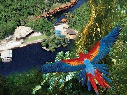Floresta amazônica #FlorestaAmazonica