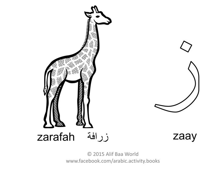 The 11th letter of the Arabic alphabet is: ز (Name: zaay) (Sound: z)  for زرافة (Pronounced: zarafah) (English: Giraffe).  Print and color the letter, the animal, and draw its environment in the background. After you are done, share your finished work with your name and age in the comments below. Have fun !!!  P.S. For more fun activities, check out the Arabic Alphabet Activity Book (http://www.amazon.com/author/aliakhaled).