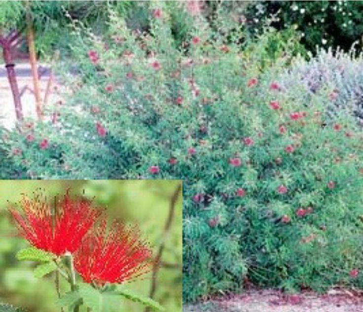 desert plant hummingbird red flower garden 10 gardens red flowers