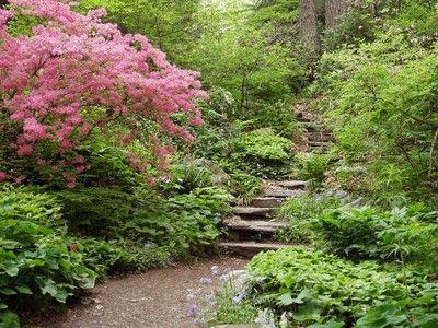 Garden Ideas New England 70 best woodsy garden images on pinterest | woodland garden
