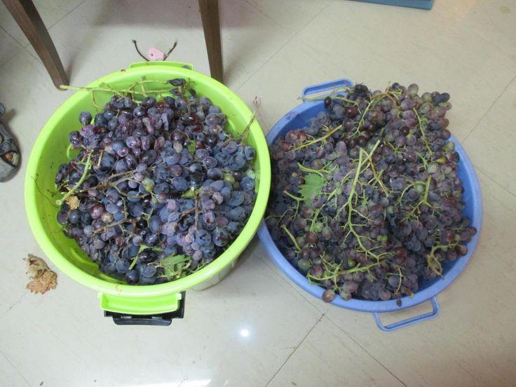 Wine Making at Home DIY