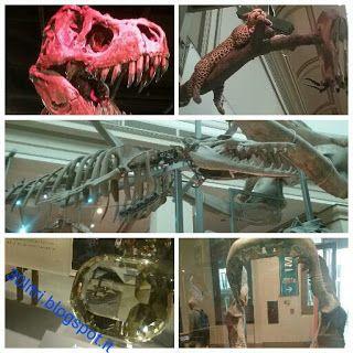 Usa: Washington, DC, la meraviglia dei musei lungo il National Mall