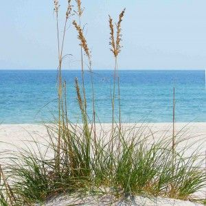 32 best images about orange beach alabama on pinterest for Winter vacation east coast