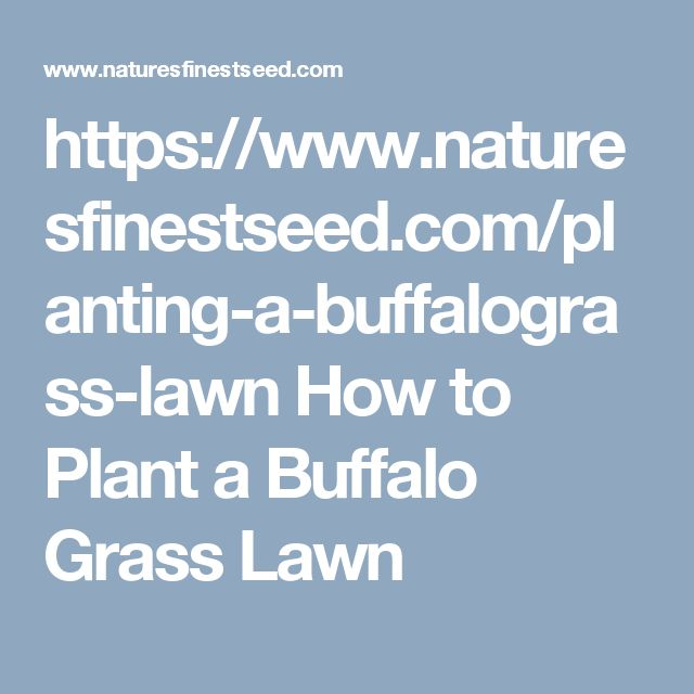https://www.naturesfinestseed.com/planting-a-buffalograss-lawn  How to Plant a Buffalo Grass Lawn