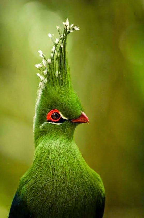 Nature Got Really Weird When These 20 Birds Evolved, Because, WHOA. #3 Is Nuts!