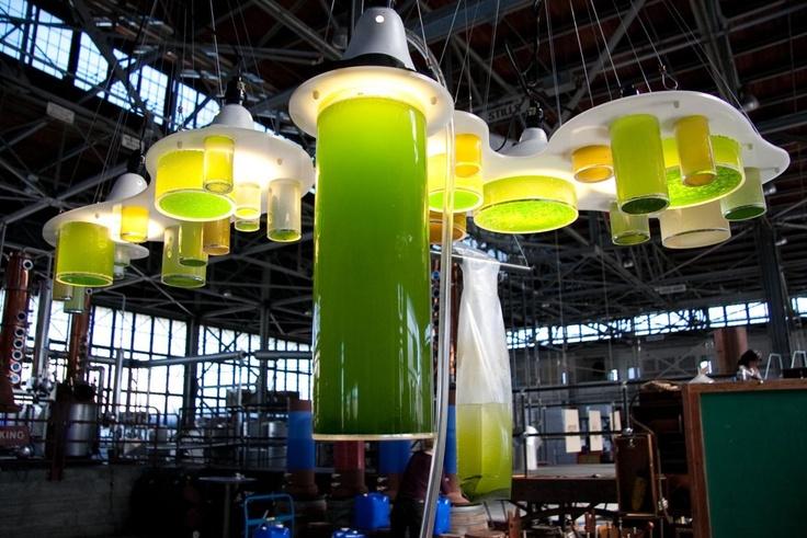 Denise King | growth and DK :: Algae Chandelier
