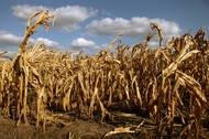 Dry Land - Video - The New York TimesNew York Time