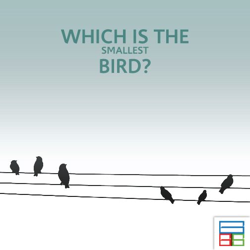 The bird live in Cuba. #Quiz #Kids