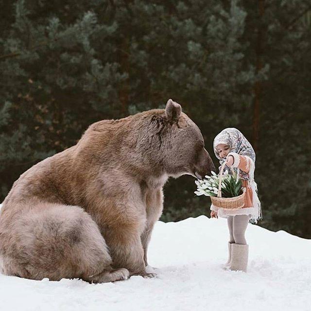 All of the # # medvedstepan Russian winter # # # girl and snowdrops photo by @ olga.barantseva # zhivoymedved # good # # affectionate friend les # # # snow photo session # # russkiymedved Russian model # # # fotodlyarossiii fotografvmoskva Bear # # # fotosesiyaskhischnikami # zhivoymedved portfolio #like # like4like #art #oso #bear #animallover #beautifull