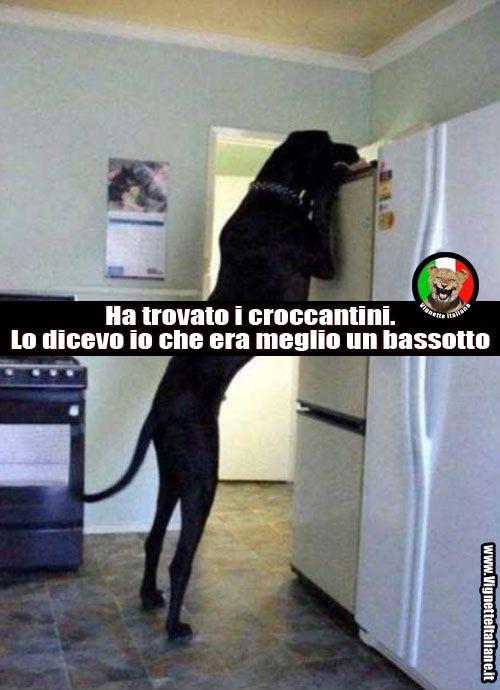 Ma cosa sta cercando?  http://www.vignetteitaliane.it #vignette #immagini #divertenti #italiano #lol #funny #pictures #italian #cani #dogs